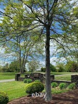 Burial plot (2 graves) in Woodbury Memorial Park Cemetery, Woodbury NJ